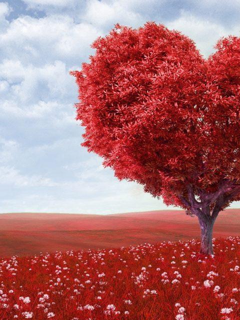 lecții despre iubire